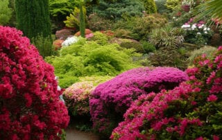 Benefits of Plant Diversity
