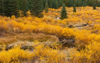 What habitats are in Colorado?